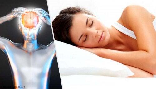 A importância do sono para o cérebro