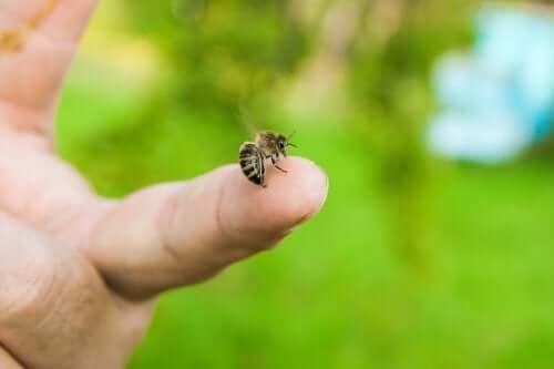 Como agir diante de uma picada de abelha