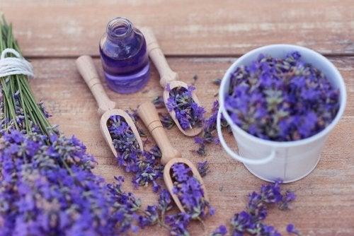 5 remédios relaxantes com lavanda