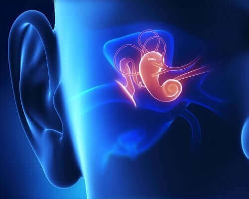 Anatomia do ouvido interno