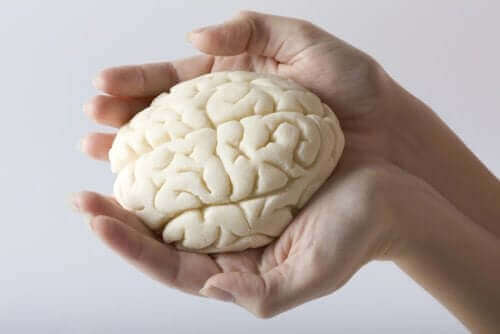 Cérebro em miniatura