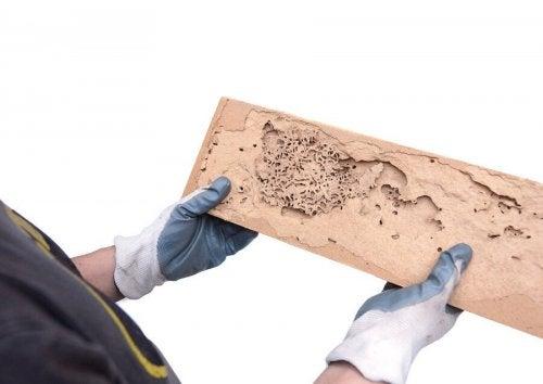 Como saber se a madeira tem caruncho?