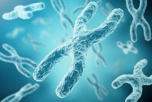 Genes do DNA