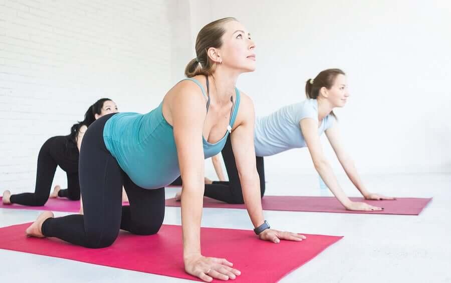 Ginástica para grávidas: exercícios durante a gravidez