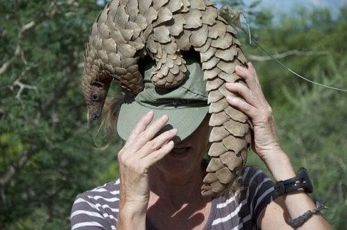 Mulher com pangolim na cabeça
