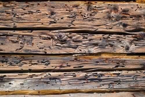 Buracos feitos por carunchos