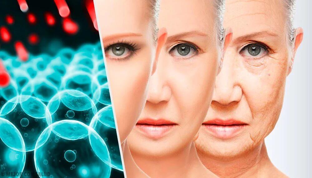 Os radicais livres e o envelhecimento