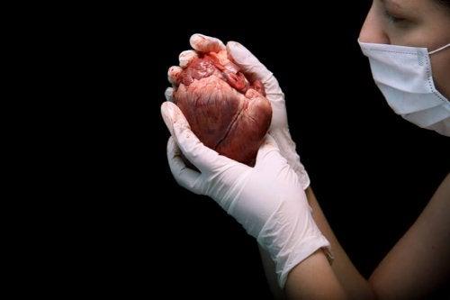 Transplante de coração: como é o processo?