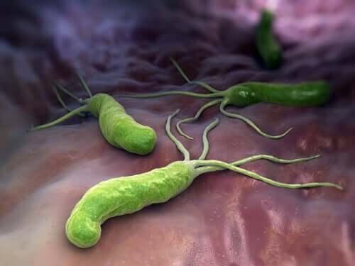 Bactérias que atacam o corpo humano