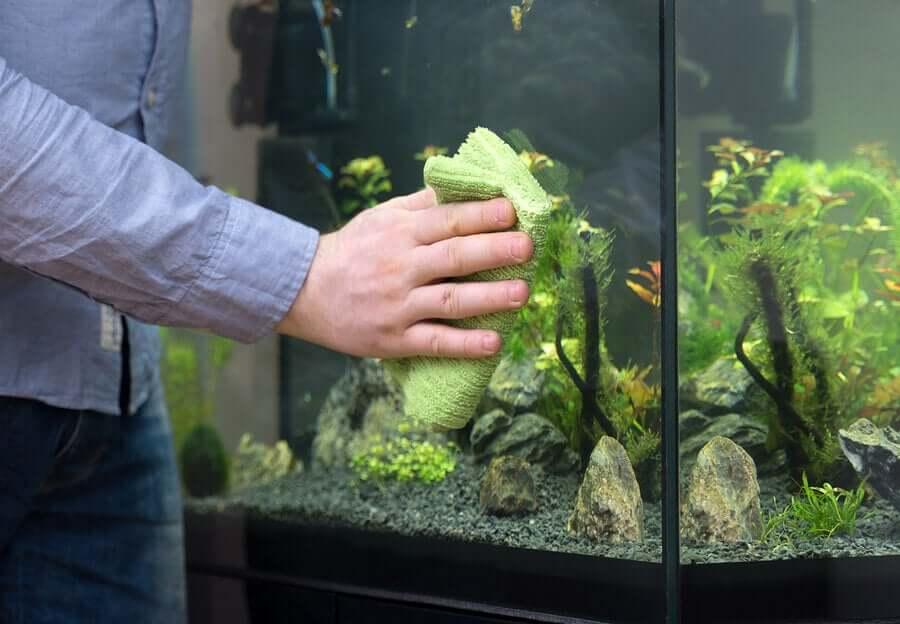 Como limpar um aquário da melhor forma?