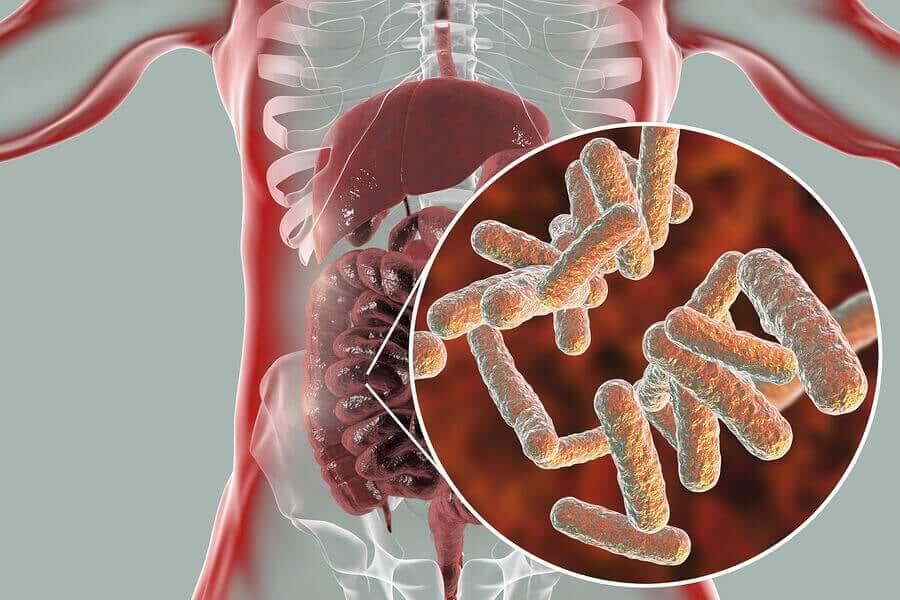 A microbiotia intestinal