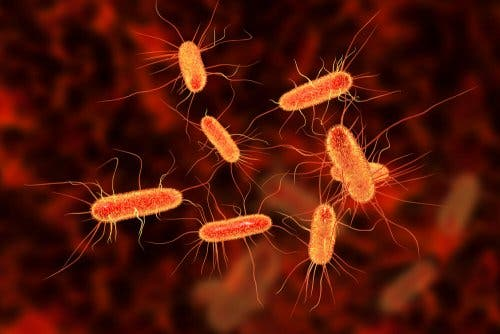 Impetigo e bactérias
