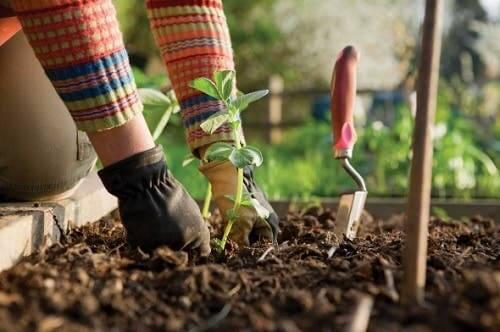 Pessoa cuidando do jardim