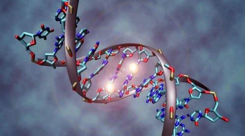 Características genéticas
