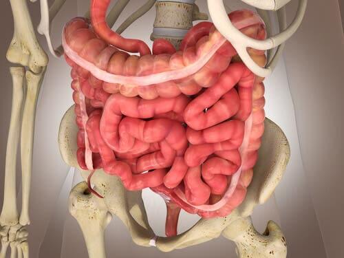 Infarto intestinal mesentérico: exames e tratamentos
