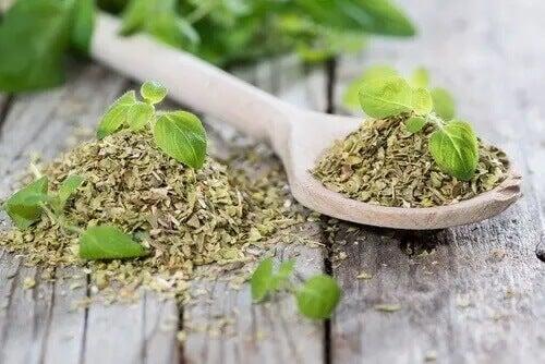 Orégano: um dos tratamentos relaxantes para o torcicolo