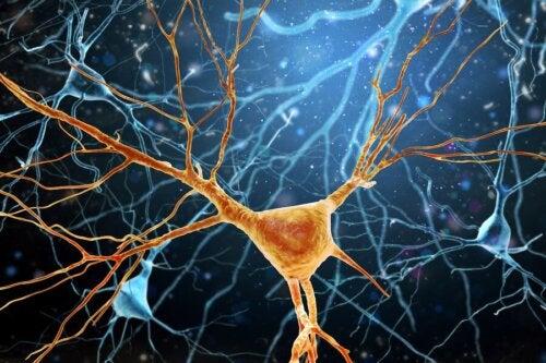 Os neurônios de Von Economo