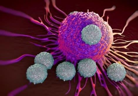 Papel dos antígenos e anticorpos no sistema imunológico