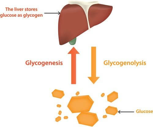 Regulação da glicose