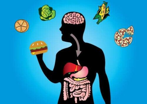 Otimizar o metabolismo