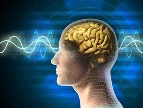 Cérebro jovem e saudável