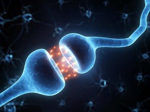 Transmissão neuronal