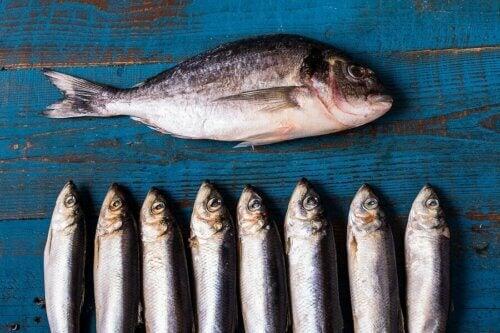Peixes inteiros crus