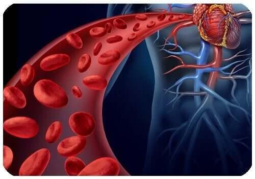 Saúde circulatória