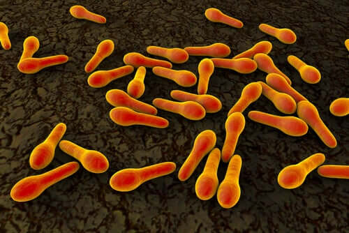 Bactérias vistas de perto
