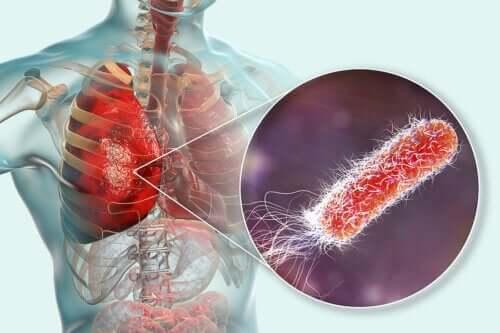 Existem bactérias nos pulmões?