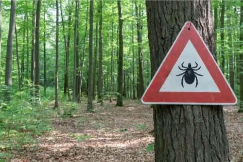 Tratamento da doença de Lyme