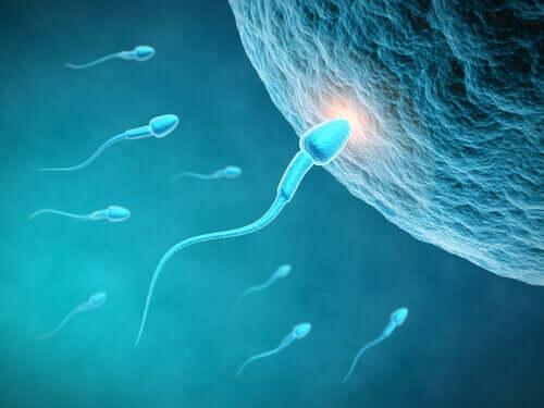 A influência da dieta na qualidade do esperma