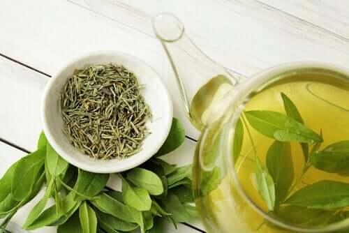 O chá verde pode aumentar a longevidade?