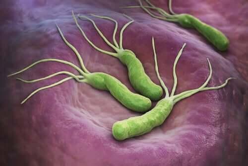 Existe uma relação entre a bactéria Helicobacter pylori e o câncer?