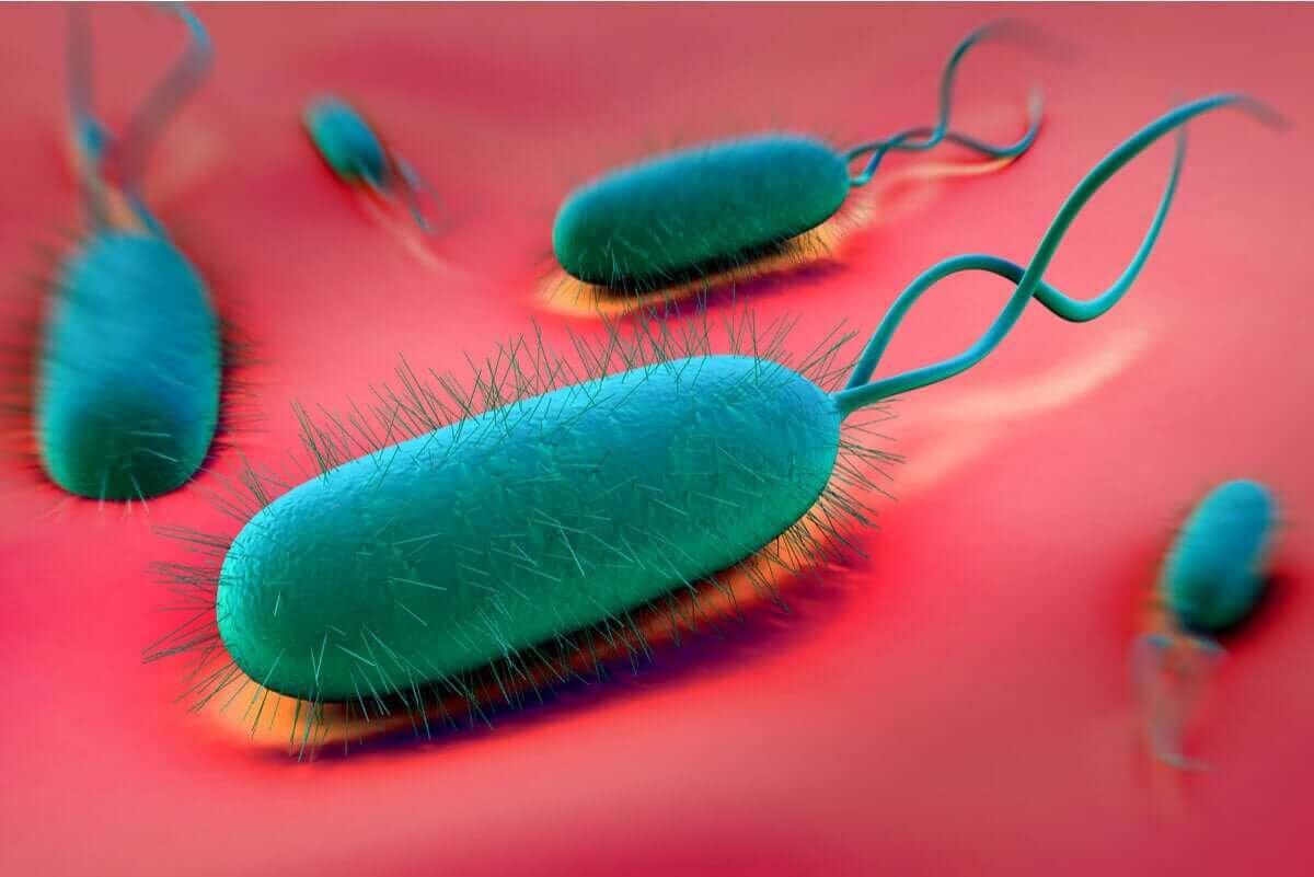 Bactérias no estômago