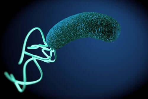 Bactéria vista de perto