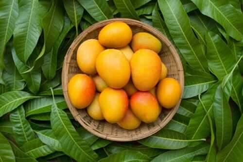 6 benefícios das folhas de manga que você precisa conhecer