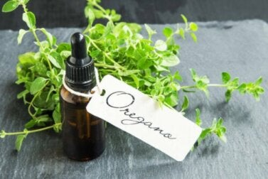 Como preparar óleo de orégano caseiro e quais são os seus benefícios?