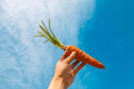 A cenoura possui uma grande quantidade de carotenos