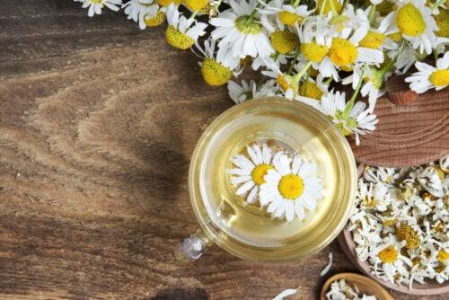 Flores de camomila em chá