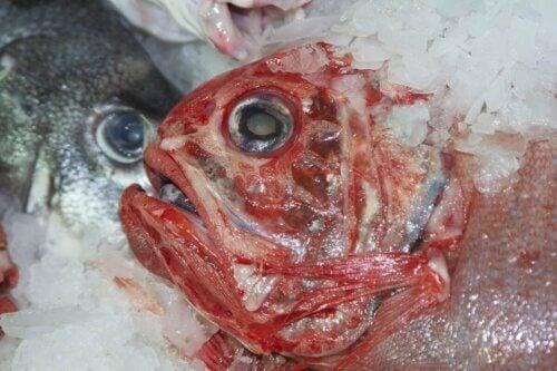 Peixe contaminado