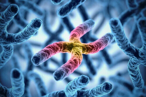 Herança genética
