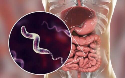 Infecções por Campylobacter: tudo que você precisa saber