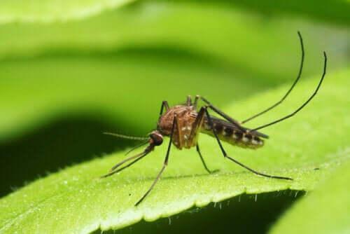 Principais doenças transmitidas por mosquitos