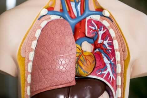 O transplante de pulmão é uma cirurgia complexa