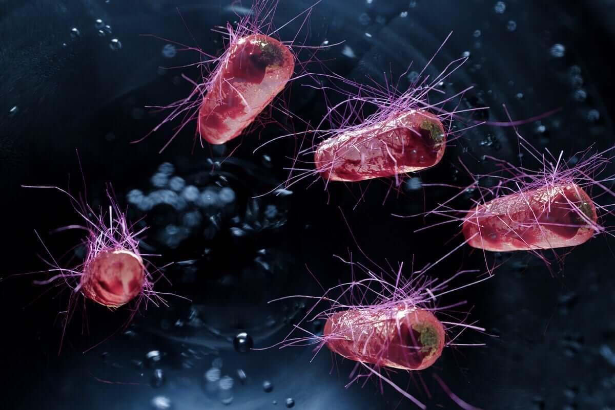 A bactériaEscherichia coli