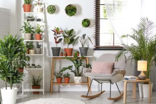 Plantas resistentes que não requerem muitos cuidados
