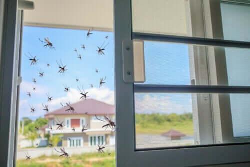 Manjericão como remédio natural contra os mosquitos