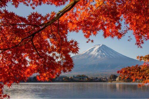 Flores vermelhas no Japão
