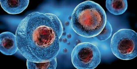 Ciclo de reprodução dos vírus